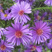 fiori settembrini