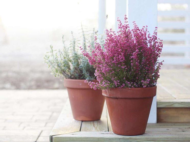 giardino o in terrazzo