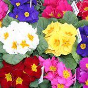 fiori di febbraio