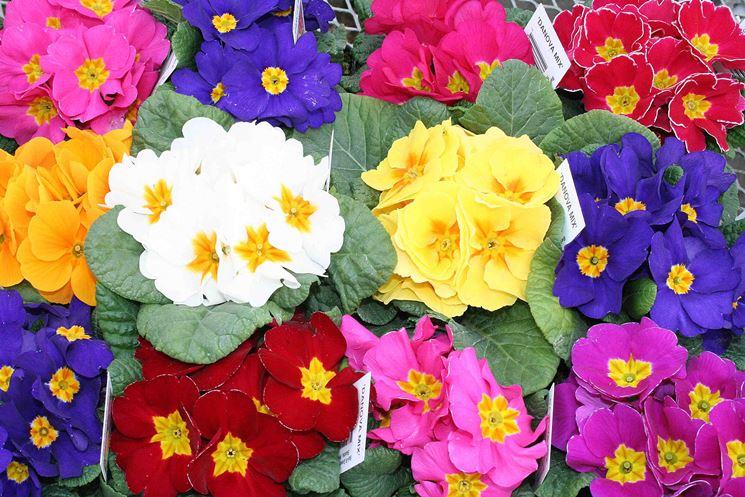 Semina giardino fiori perenni febbraio speciali semina for Fiori primaverili da giardino