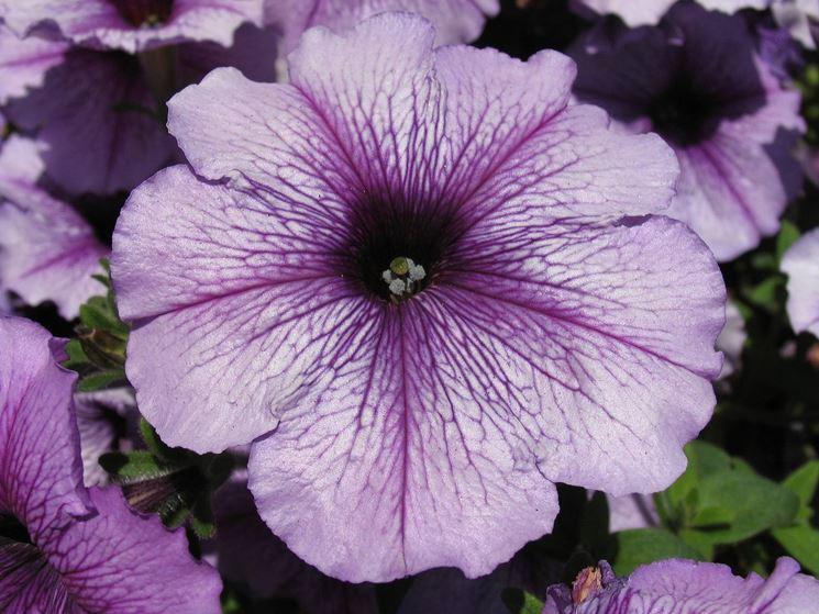 Germoglio fiori ornamentali