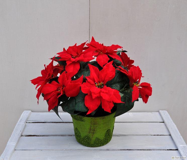 Stella Di Natale Cura E Manutenzione.Stella Di Natale Cura Piante Annuali Stella Di Natale Cura