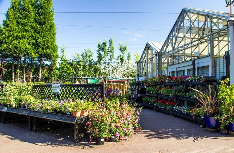 Vivai piante piante annuali piante nei vivai for Piante annuali