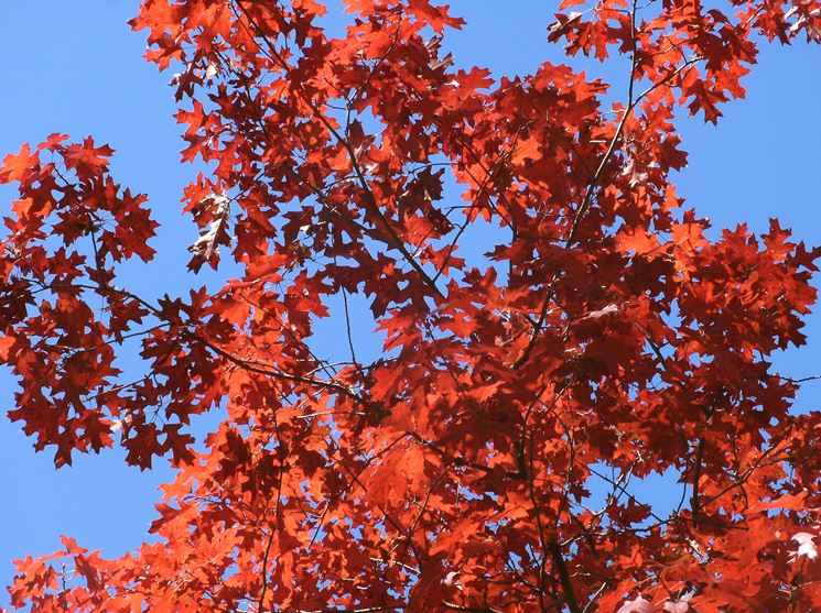 Alberi da fiore da giardino piante da giardino alberi - Albero sempreverde da giardino ...
