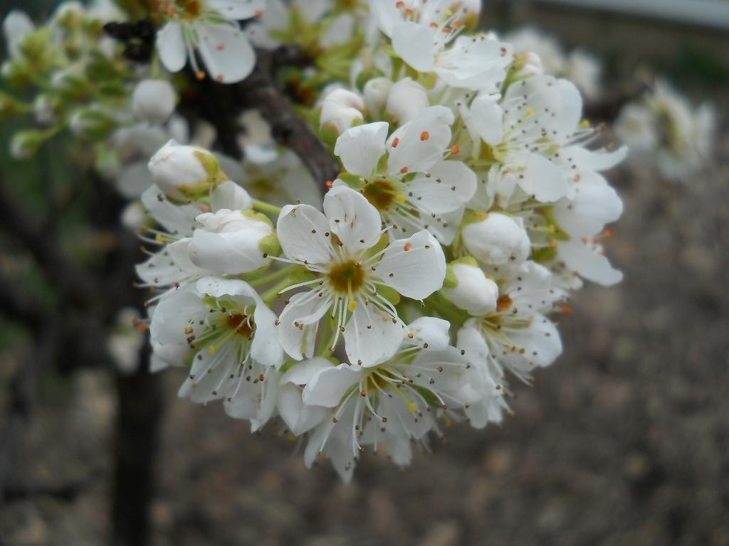Piante da fiore da giardino idee per il design della casa for Piante e alberi da giardino