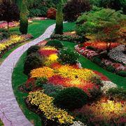 fiori simili alle rose