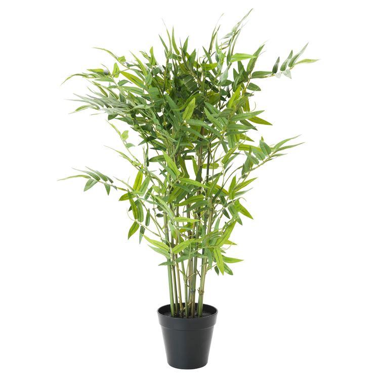 pianta di bamboo