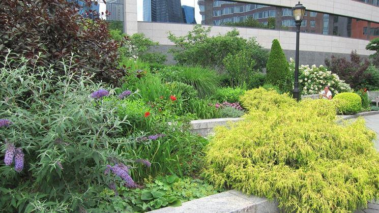 Coltivazione giardino buddleia