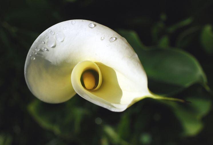 Cespuglietto di foglie con venature biancastre