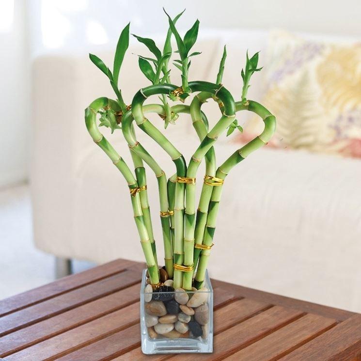 Dettaglio foglia canna di bamboo