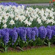 piante da giardino resistenti al freddo