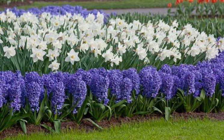 Piante Da Giardino Invernali : Colori invernali per aiuole fredde piante da giardino