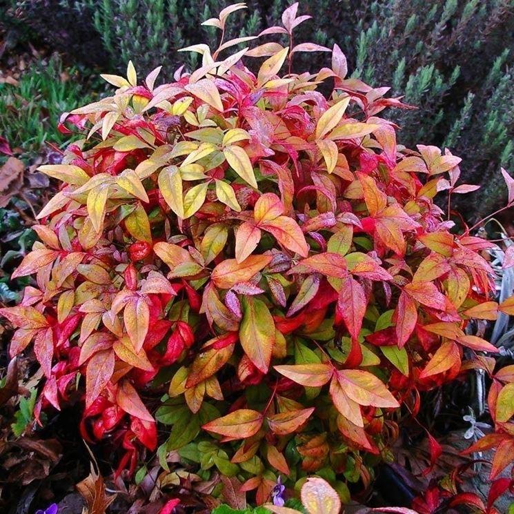 Colori invernali per aiuole fredde piante da giardino - Piante da giardino invernali ...