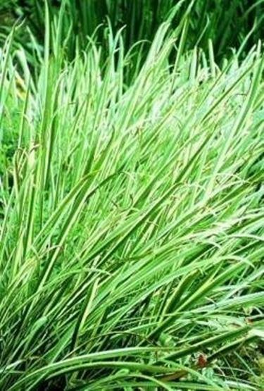 Conoscere le piante da giardino piante da giardino for Piante esterne da giardino