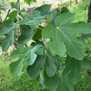 piante del bosco