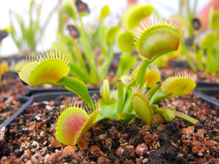 Le piante piante da giardino piante - Nomi di piante da giardino ...