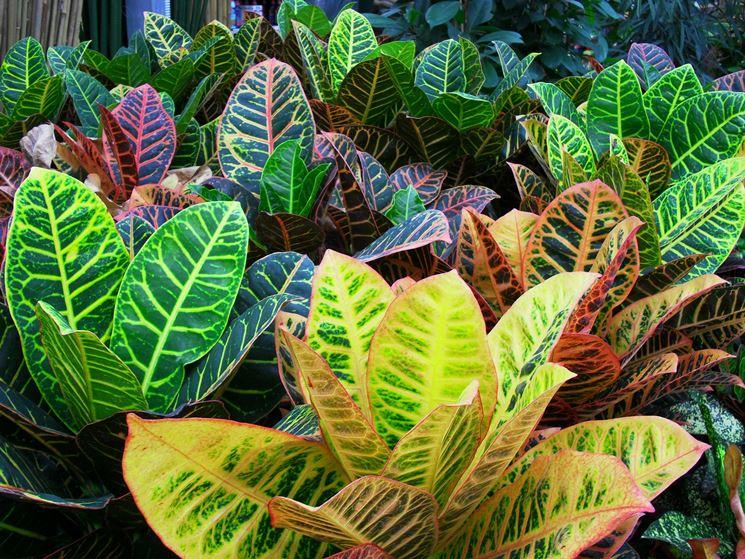Le piante piante da giardino piante - Piante ornamentali da giardino ...