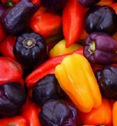 Peperoncini - Peperoncino pianta perenne ...