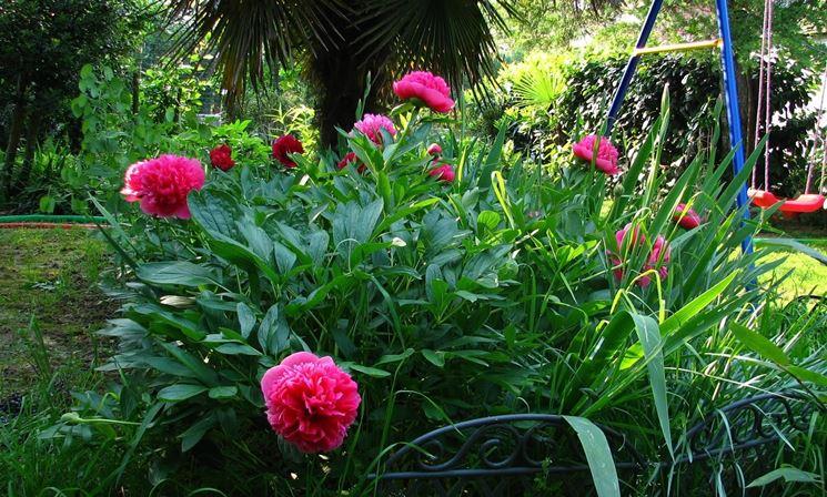 Pianta da esterno piante da giardino pianta per - Piante da giardino ombra ...