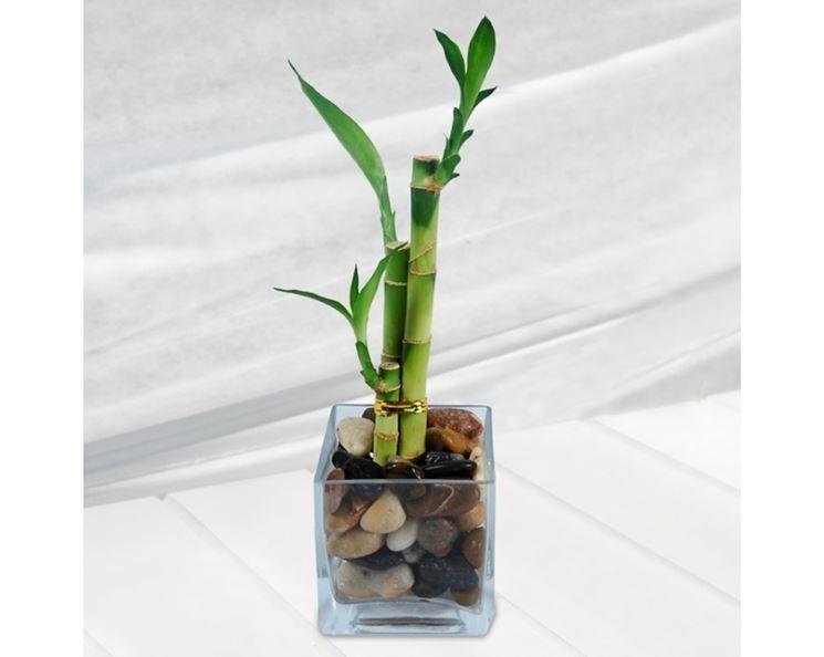 Bamboo in casa
