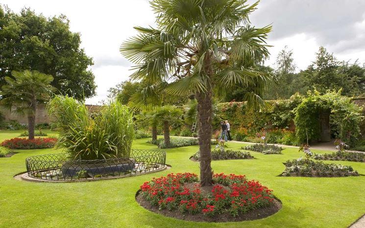 Pianta di palma piante da giardino le tante variet di - Tipi di palma da giardino ...