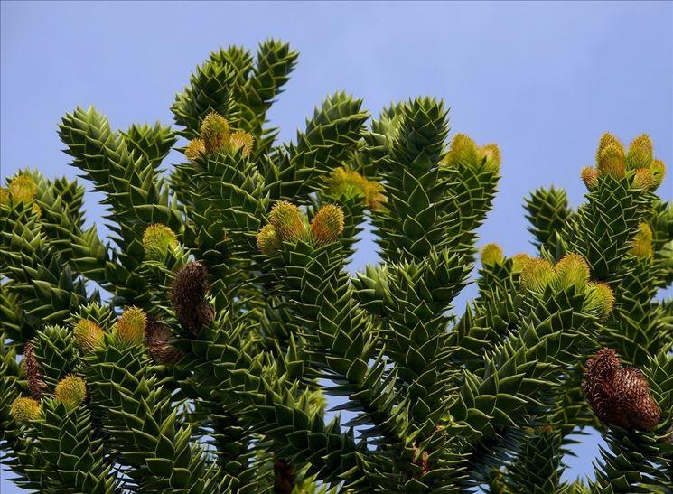Piante da esterno sempreverdi piante da giardino - Sempreverde da giardino ...
