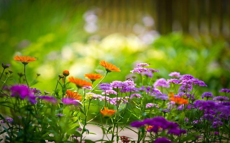 Top Piante da giardino con fiori - Piante da Giardino - Piante con  WB59