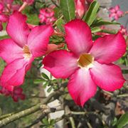 piante con fiori