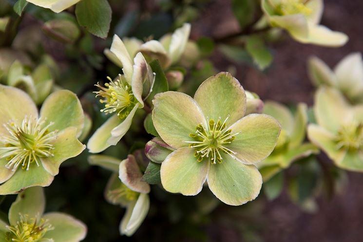 piante da giardino invernali piante da giardino piante