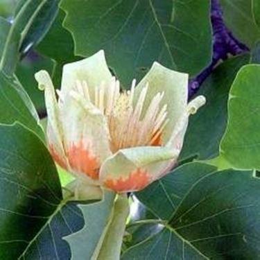 Piante da giardino sempreverdi piante da giardino - Piante mediterranee da giardino ...