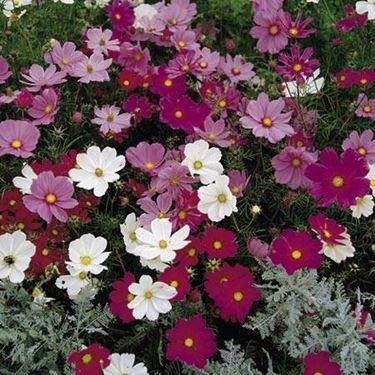 Vendita piante da giardino vivai piante ferretti share for Vendita piante da giardino