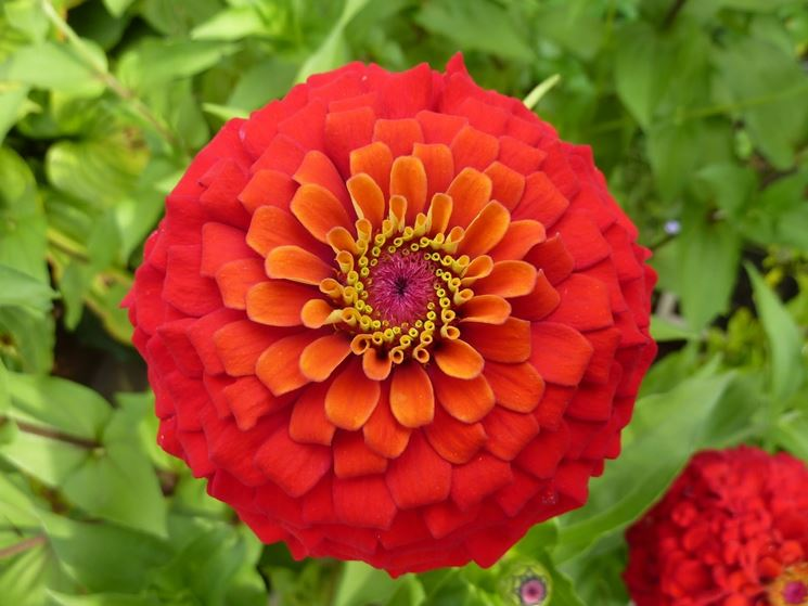 Piante in fiore piante da giardino piante fiorite - Piante da giardino fiorite ...