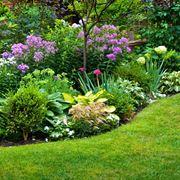 piante in giardino