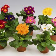 fiori in vaso da esterno