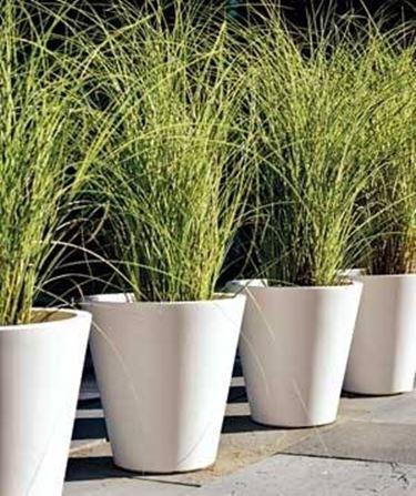 Piante in vaso da esterno - Piante da Giardino - Piante da esterno in vaso