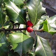 piante da esterno invernali
