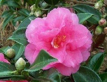 Piante invernali da esterno piante da giardino fiori for Piante da cespuglio