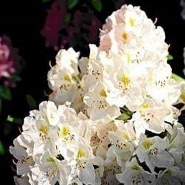 Piante ornamentali da esterno piante da giardino piante da esterno ornamentali - Piante ornamentali da giardino ...