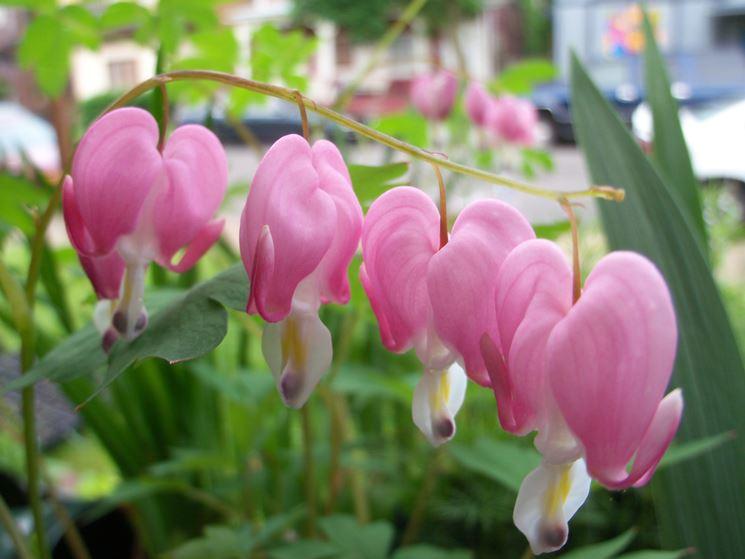 Piante ornamentali piante da giardino piante for Nomi piante da giardino