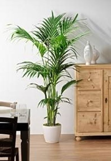 Piante ornamentali piante da giardino piante da ornamento for Kenzia esterno