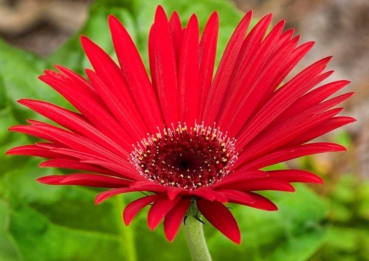 Piante ornamentali piante da giardino piante da ornamento for Fiori ornamentali