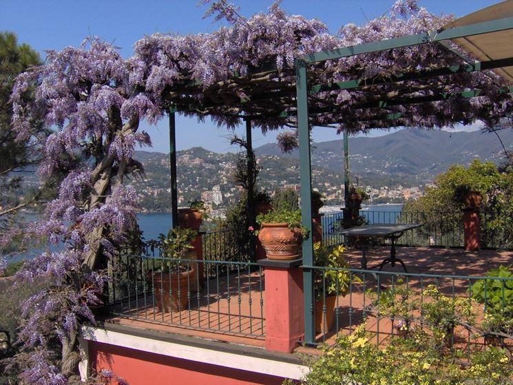 Piante per giardini piante da giardino piante per esterno - Piante per giardino ...