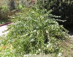 Piante verdi da esterno piante da giardino - Piante verdi da esterno ...