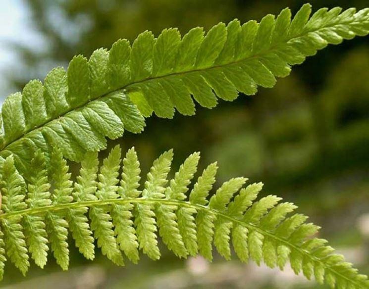 piante verdi da esterno piante da giardino specie da