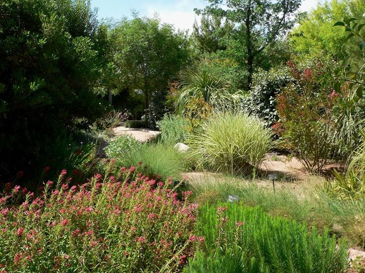 piante verdi da giardino