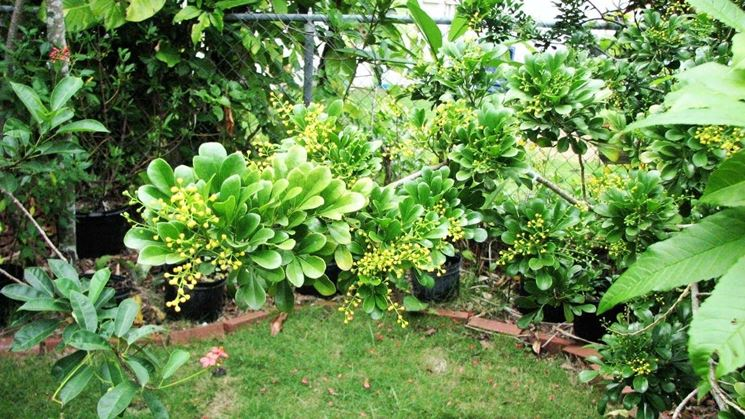 Piante verdi da giardino piante da giardino piante for Piante verdi perenni da giardino