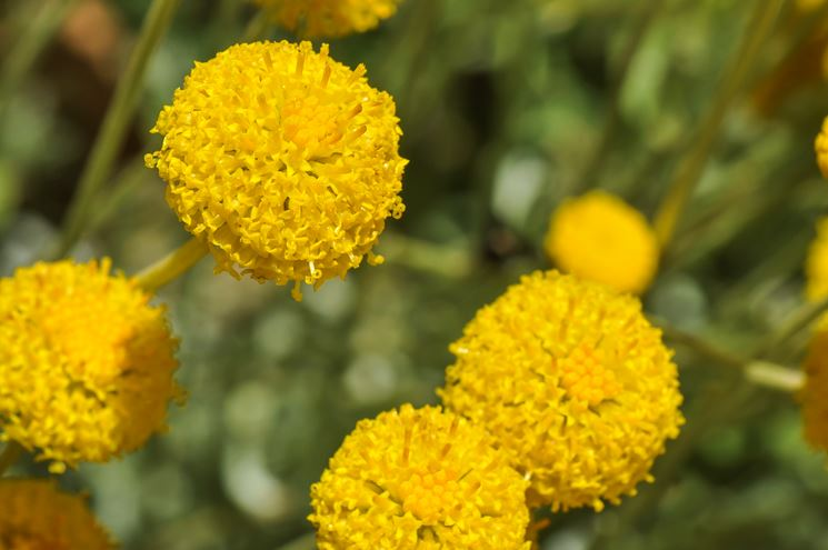 Fiore piante giardino