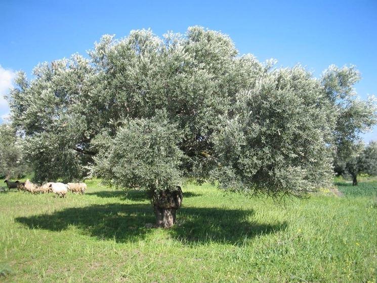 Sempreverdi piante da giardino piante sempreverdi - Piante giardino sempreverdi ...