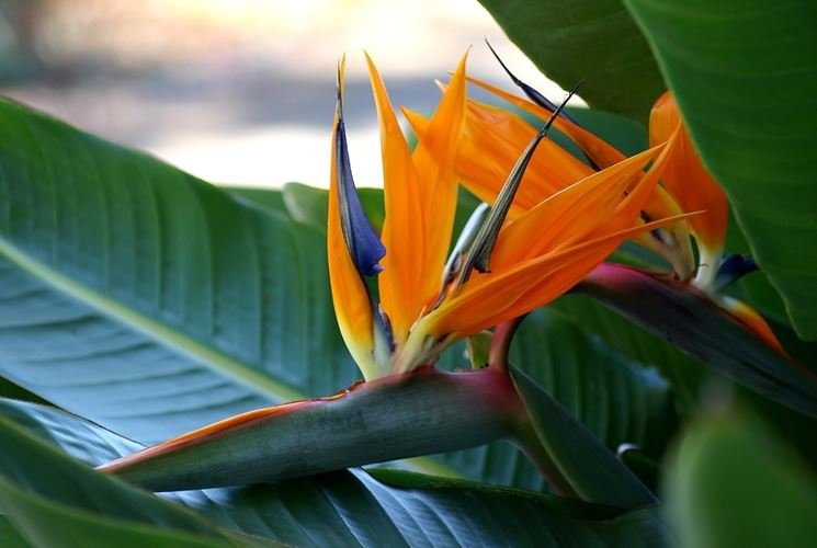 pianta esotica