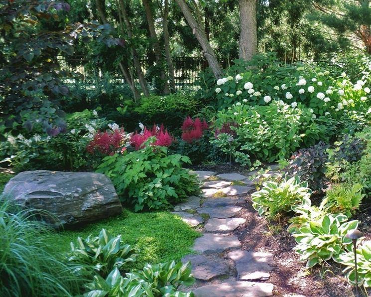 top 10 piante da ombra piante da giardino